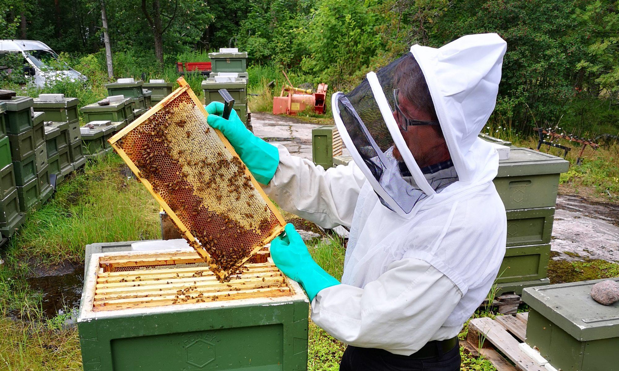 P.E.T. Bees Oy